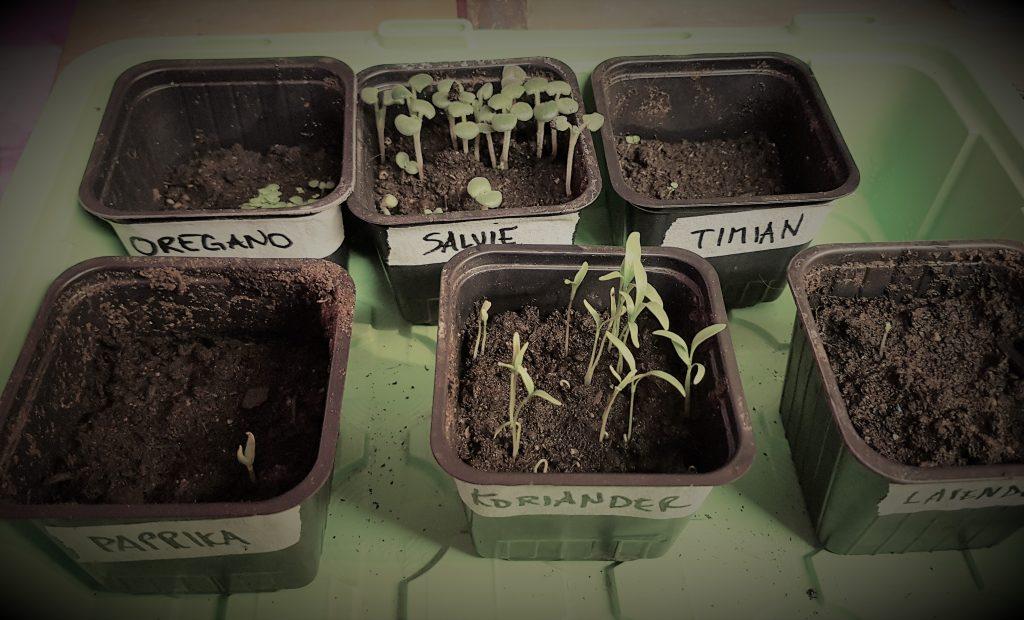 frøplanter