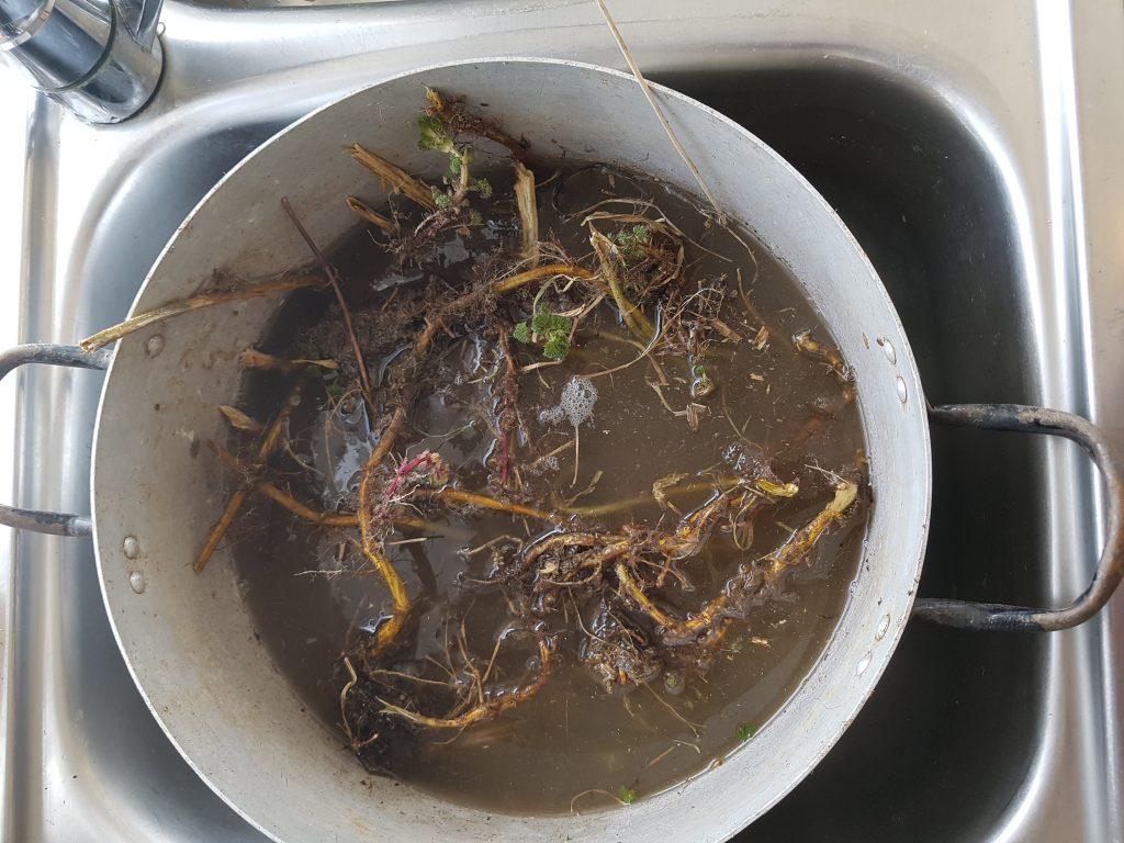 Grav opp røttene og vask dem i en stor balje. Rensk ut evt annet plantemateriale som har blitt med. Bruk en hagesaks til å klippe dem opp