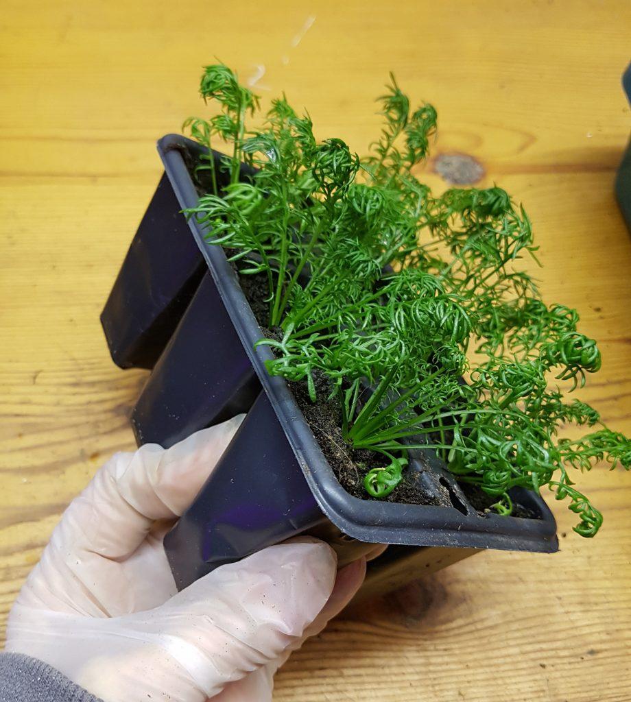løsne plante fra pluggbrett