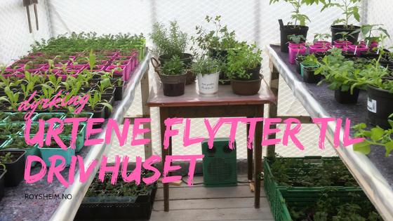 urter i drivhuset