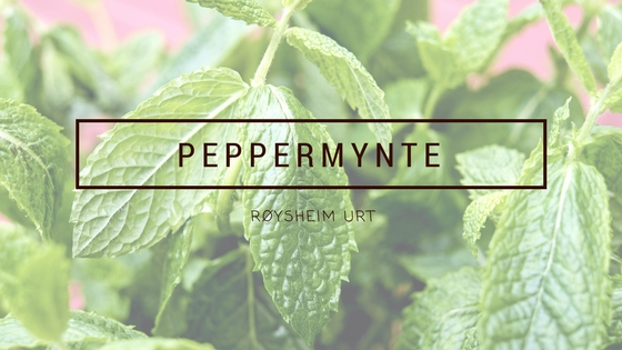 peppermynte