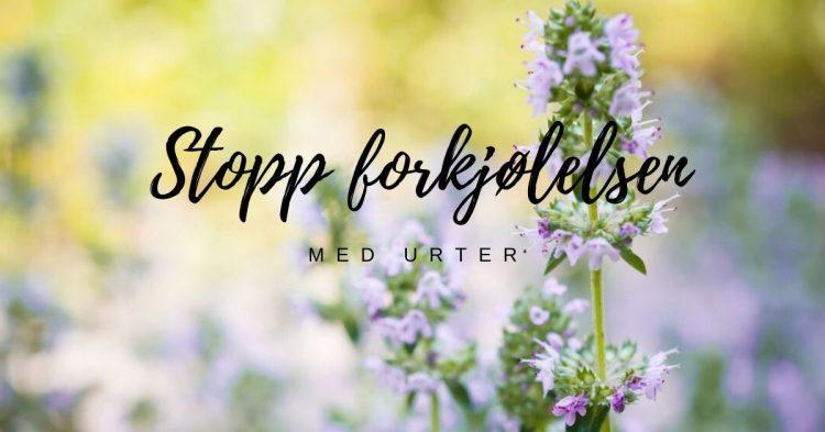 stopp forkjølelsen med urter