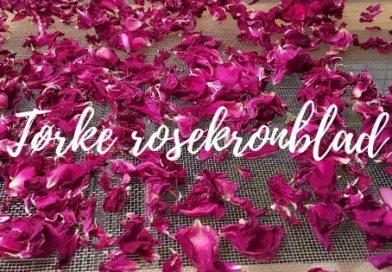 Tørke rosekronblad fremhevet