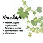 marikåpe