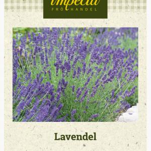 Frø Lavendel