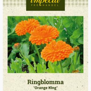 Ringblomst Orange King