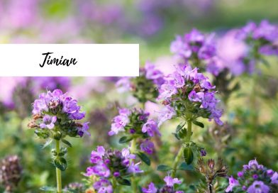 Blogg timian