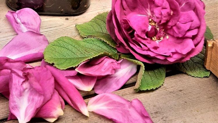 vaske urtene rose