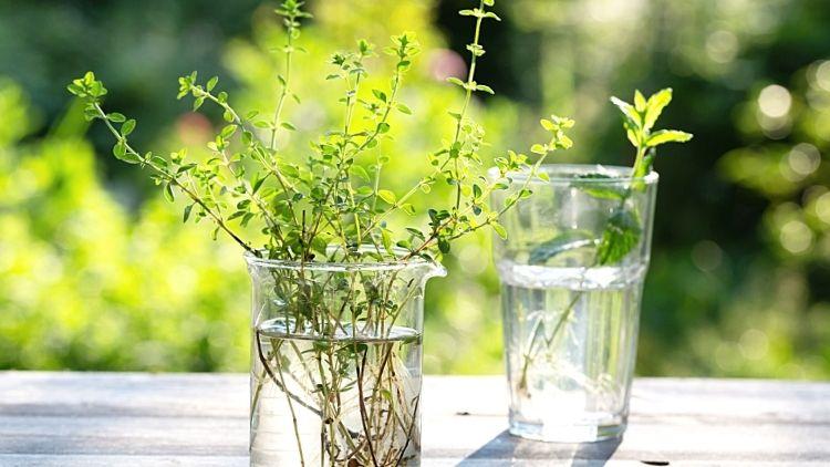 Stiklinger av urter